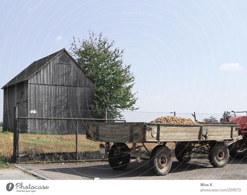 die dümmsten Bauern.... Natur Baum Ernährung Herbst Garten Feld Lebensmittel frisch Gemüse Landwirtschaft Hütte Ernte Zaun Ackerbau Bioprodukte Scheune