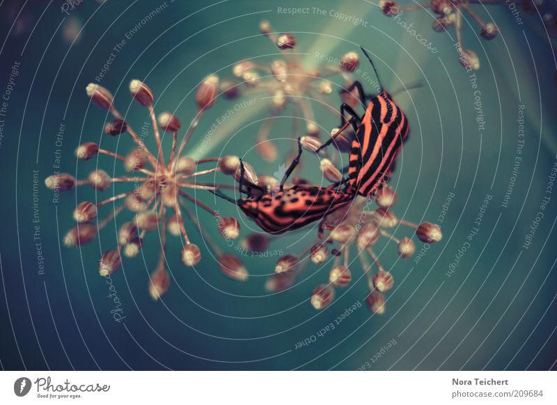 Blümchensex Natur Pflanze Frühling Sommer Blume Sträucher Blüte Tier Käfer 2 Tierpaar träumen heiß wild Stimmung schön Freude Surrealismus Farbfoto