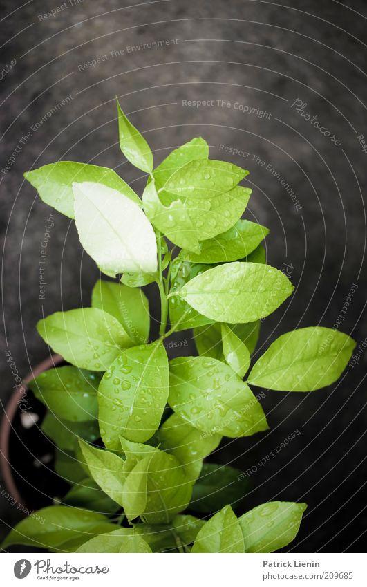 after the rain Natur grün Pflanze Sommer ruhig Blatt dunkel Garten Umwelt Regen glänzend nass Wassertropfen Boden weich Urelemente