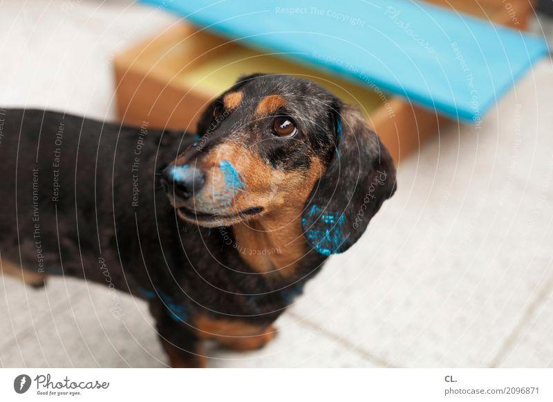 carlson streicht ein brett Hund blau Tier lustig Wohnung Häusliches Leben Dekoration & Verzierung niedlich Neugier Umzug (Wohnungswechsel) Möbel Holzbrett