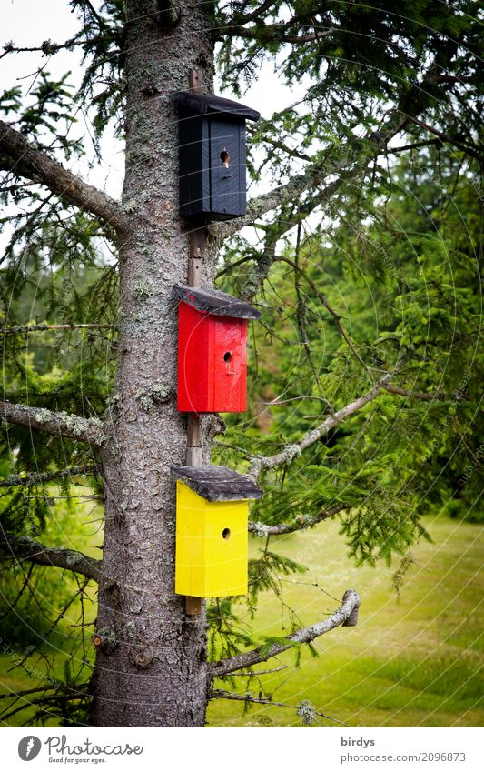 patriotische Vögel Wohnung Baum Wiese Deutschland Nistkasten Zeichen außergewöhnlich lustig positiv gelb rot schwarz Farbe Gesellschaft (Soziologie) Identität
