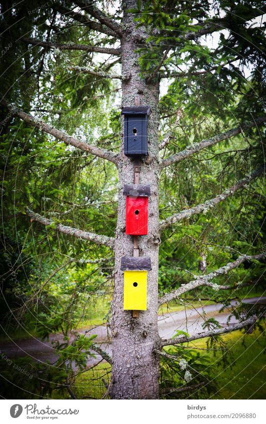 aus Ermangelung an Stoff Kunst Frühling Sommer Baum Fichte Deutschland Haus Nistkasten Futterhäuschen Holz Zeichen Häusliches Leben außergewöhnlich lustig