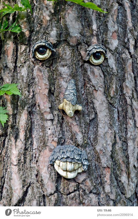 Baumgesicht. Sommer Wald Gesicht Kunstwerk Natur Pflanze Schönes Wetter Menschenleer Oberlippenbart Holz beobachten authentisch frech schön niedlich trocken