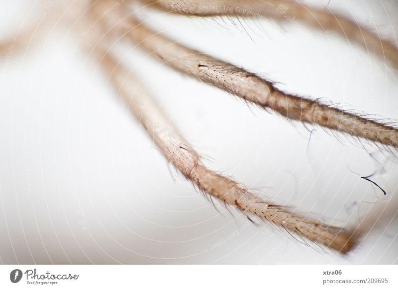 sexy beine Tier elegant dünn zart Spinne zierlich Textfreiraum links Spinnenbeine