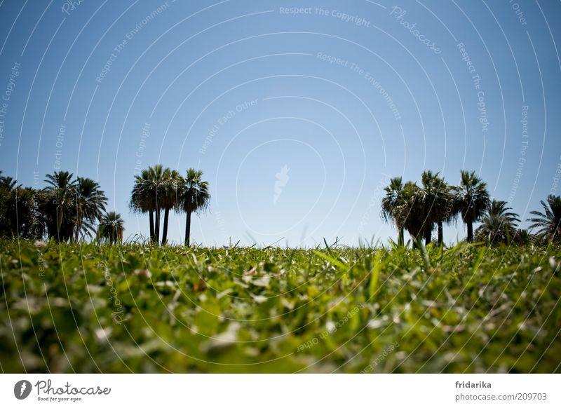 ... und das meer dahinter Landschaft Himmel Wolkenloser Himmel Sommer Baum Gras Palme Rasen Park Wiese Oase Blühend Erholung träumen exotisch blau grün