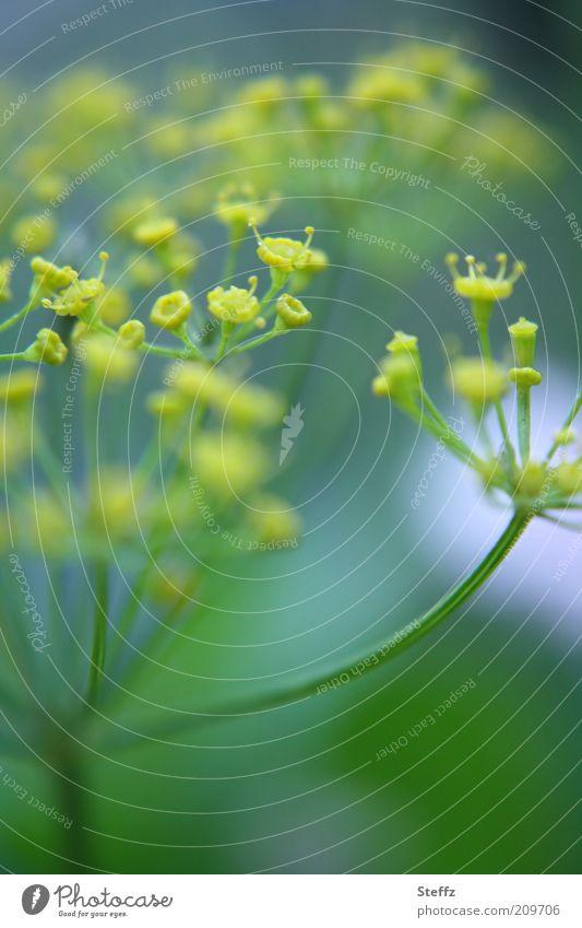 Gartenfreude Natur grün Pflanze Sommer gelb natürlich Lebensmittel Wachstum frisch Blühend Kräuter & Gewürze Landleben sommerlich Nutzpflanze