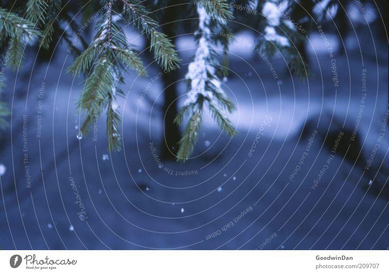 Analoger Wintertraum III Natur Baum blau ruhig Wald Schnee Schneefall Stimmung Wetter Umwelt authentisch nah einfach fallen Zweig geduldig