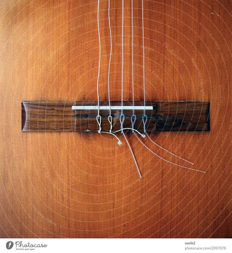 Entspannter Sound Kunst Musik Gitarre Steg Saite gespannt beweglich Holz Kunststoff dünn fest Zusammensein braun orange Einigkeit Erholung gleich Krise Kultur