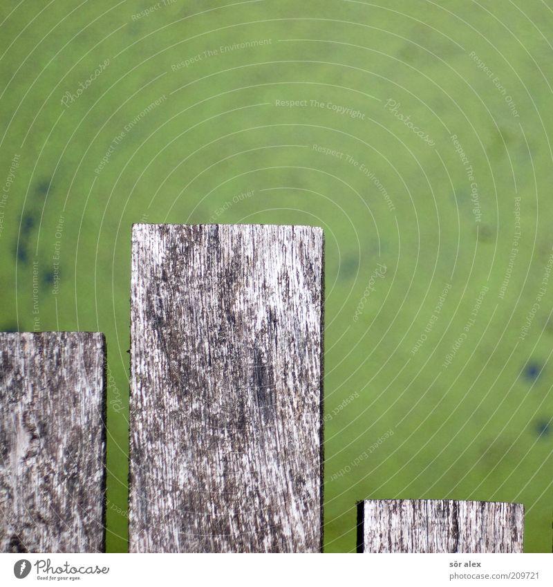 altes Holz Steg Teich Wasser eckig grau grün überbrücken Holzbrücke Holzbrett Altholz Balken Diagramm Farbfoto Außenaufnahme Nahaufnahme Menschenleer