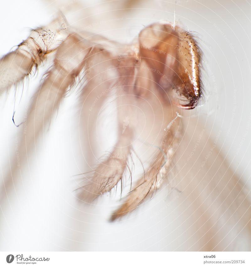 haut-nah Tier authentisch Insekt Tierhaut durchsichtig Spinne Makroaufnahme Mikrofotografie Spinnenbeine