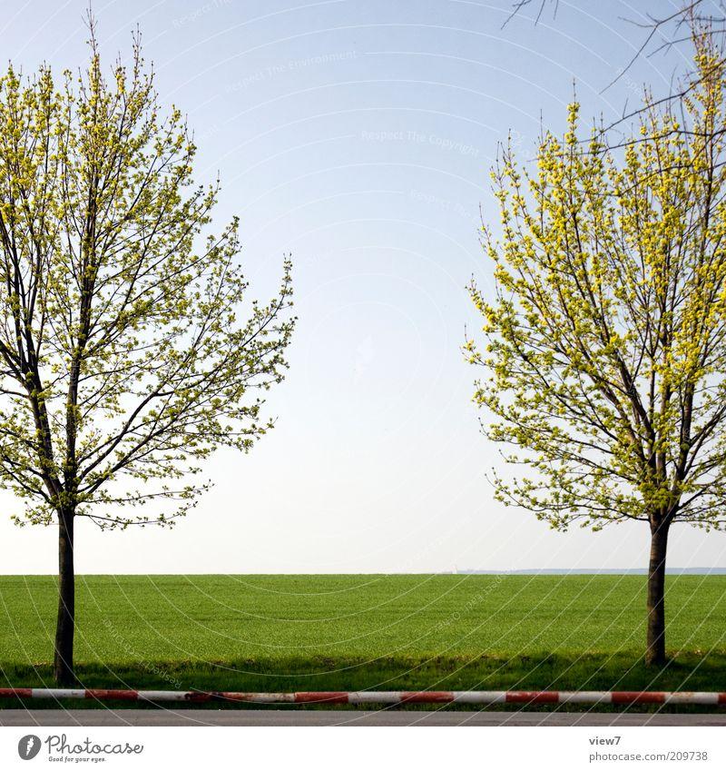Symetrie Umwelt Natur Landschaft Pflanze Sommer Schönes Wetter Baum ästhetisch dünn einfach einzigartig Ordnung rein schön Stimmung Symmetrie Schranke Feld