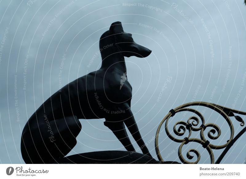 Wachdienst Hund Wolken dunkel Metall Kraft sitzen elegant Schilder & Markierungen Dekoration & Verzierung Sicherheit beobachten Schutz Zeichen lang stark Mut