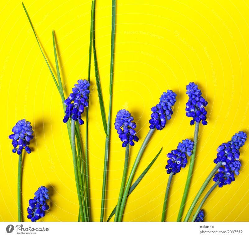 Natur Pflanze blau Sommer schön grün Blume Blatt gelb Blüte natürlich Garten Feste & Feiern hell Dekoration & Verzierung frisch