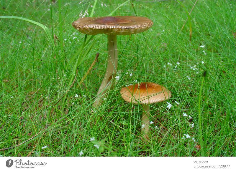 Waldbewohner grün Wiese Gras Sammlung Pilz