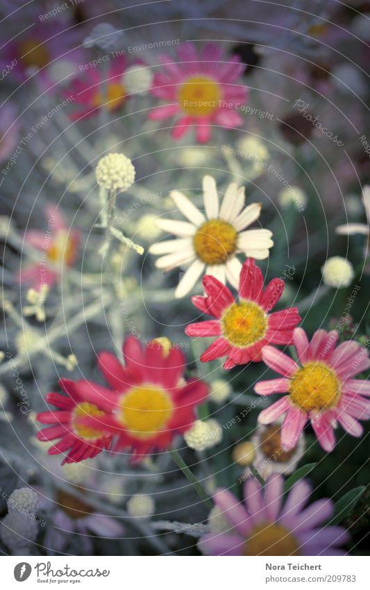 Bitte lächeln :) schön Blume Pflanze rot Sommer Gefühle Blüte Gras Glück träumen Stimmung frisch ästhetisch Wachstum violett Wunsch