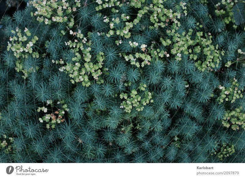Nature first! Umwelt Pflanze Blume Gras Sträucher Blatt Grünpflanze Nutzpflanze Wildpflanze exotisch Garten Wiese Urwald nachhaltig Naturliebe pflanzlich