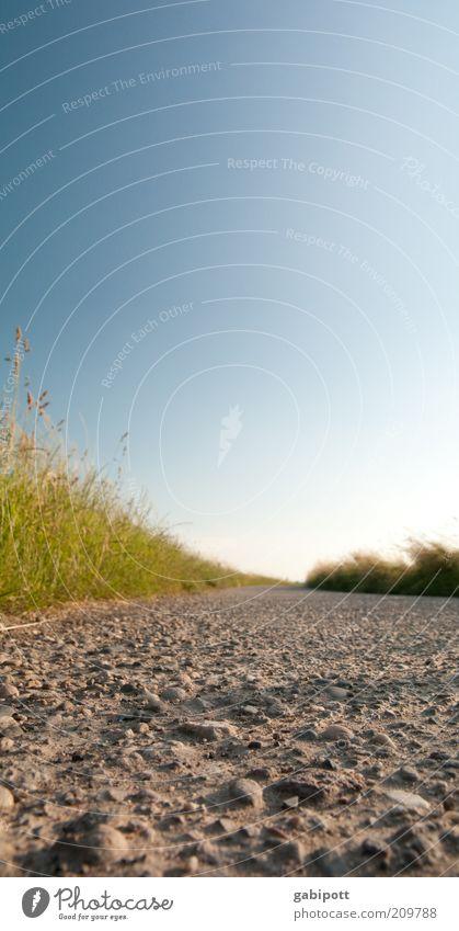 dieser weg wird kein leichter sein... Natur schön Sommer Freude ruhig Glück Wege & Pfade Wärme Sand Landschaft hell Feld frisch Fröhlichkeit Spaziergang