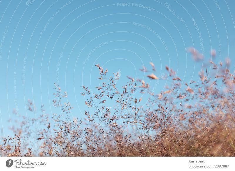 Augenblick im Wind Sommer wandern Umwelt Natur Pflanze Himmel Wolkenloser Himmel Sonnenlicht Schönes Wetter Blume Gras Sträucher Blatt Blüte Grünpflanze