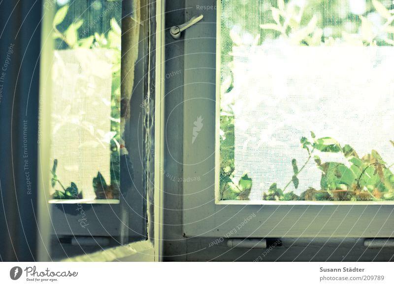 Sommer komm herein! Pflanze Fenster Tür hell Fliegengitter alt Scharnier Verschluss Holzfenster Reflexion & Spiegelung Fensterscheibe mehrfarbig Innenaufnahme