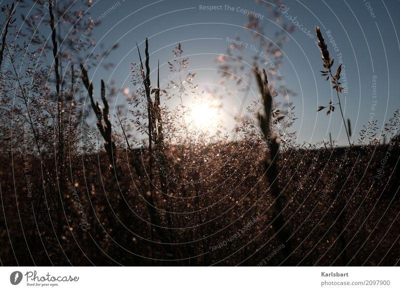 Zwischen zwei Stunden Umwelt Natur Landschaft Pflanze Himmel Wolkenloser Himmel Sonne Sonnenaufgang Sonnenuntergang Sonnenlicht Sommer Schönes Wetter Gras