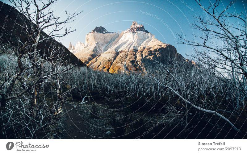 Dead and Life Tourismus Abenteuer Ferne Freiheit Berge u. Gebirge wandern Landschaft Herbst Baum Anden Cerro Torre Torres del  Paine Gipfel Wege & Pfade
