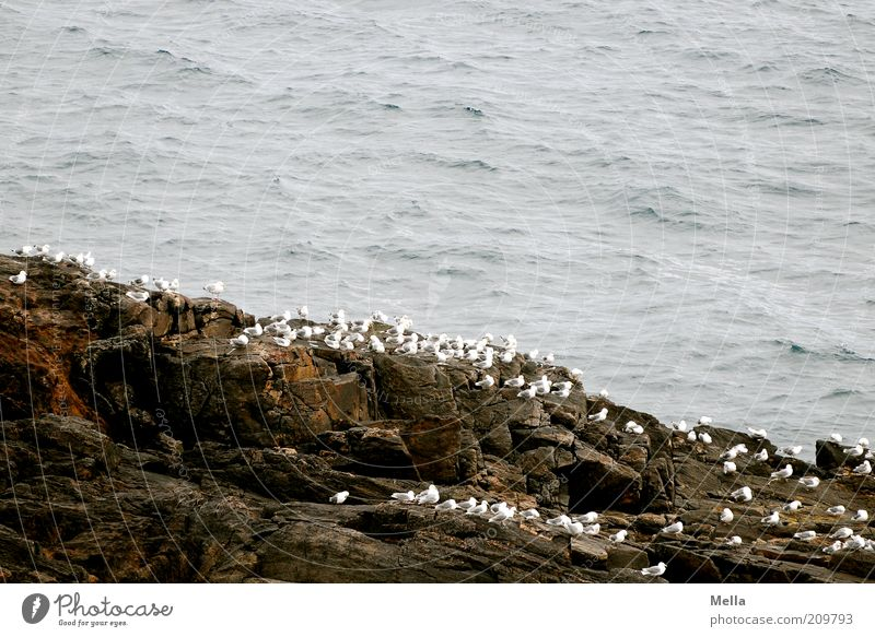 Eins, zwei, drei, ganz viele Natur weiß Meer Tier Freiheit Stein Freundschaft Stimmung Zusammensein Vogel Küste warten Umwelt frei Felsen sitzen