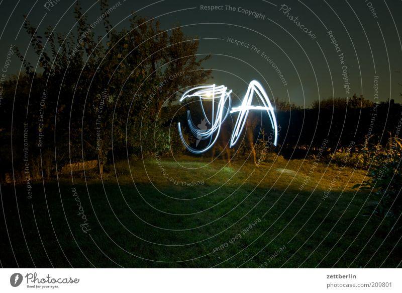 JA Baum Pflanze Wiese Gras Garten Park Linie Sträucher Schriftzeichen Information Experiment Buchstaben schreiben außergewöhnlich Zeichen