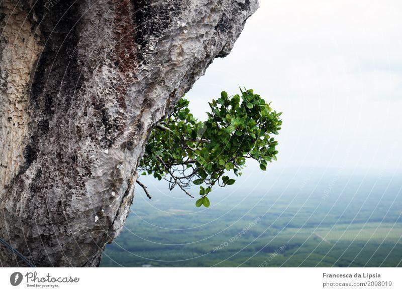 Einzelkämpfer Abenteuer Ferne Freiheit Urwald Felsen Natur Landschaft Pflanze Nebel Wildpflanze Sträucher Berge u. Gebirge Schlucht hängen