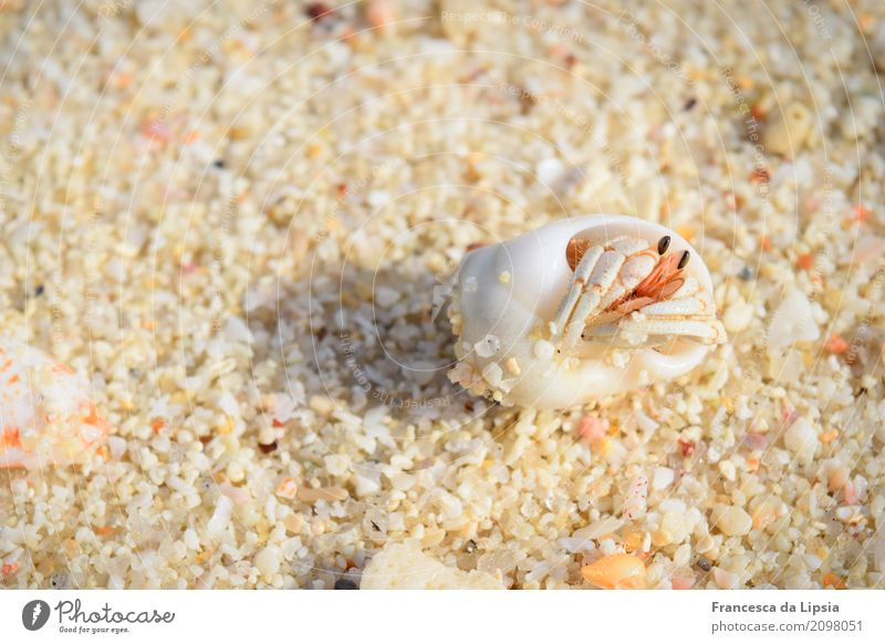 Moin! Ferne Insel Sand Sonnenaufgang Sonnenuntergang Sommer Schönes Wetter Küste Strand Tier Muschel Krebstier Einsiedlerkrebs 1 einfach frei klein maritim