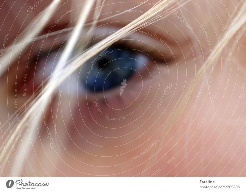 Ich seh dich! Mensch blau Gesicht Auge feminin Haare & Frisuren Kopf hell Haut blond natürlich Wimpern Identität Haarsträhne Pupille Regenbogenhaut