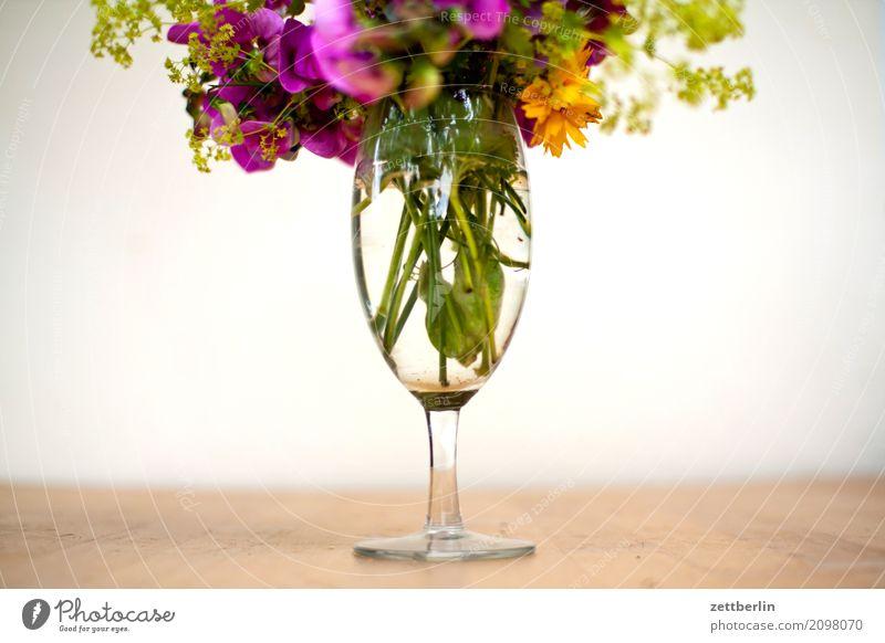 Blumen, slight return Blühend Blüte Ferien & Urlaub & Reisen Garten Gras Schrebergarten Kleingartenkolonie Menschenleer Natur Pflanze ruhig Sommer Sträucher