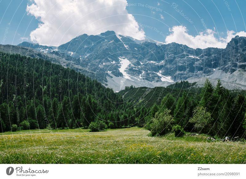 Sulden Umwelt Natur Landschaft Himmel Wolken Sommer Klima Schönes Wetter Wiese Wald Felsen Alpen Gipfel Gletscher hoch nachhaltig natürlich blau grün ruhig