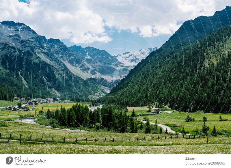 Sulden Umwelt Natur Landschaft Sommer Schönes Wetter Wiese Wald Alpen Berge u. Gebirge Gletscher Dorf natürlich blau grün Erholung Farbe Freizeit & Hobby Idylle