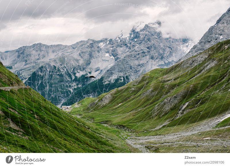 Stilfser Joch Umwelt Natur Landschaft Himmel Wolken schlechtes Wetter Alpen Berge u. Gebirge Gipfel Gletscher Straße Hochstraße gigantisch hoch natürlich grün