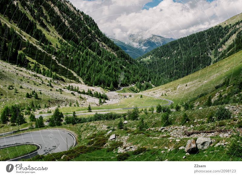 Umbrailpass Fahrradfahren Natur Landschaft Sommer Schönes Wetter Wiese Alpen Berge u. Gebirge Gletscher Hochstraße gigantisch Unendlichkeit hoch natürlich blau