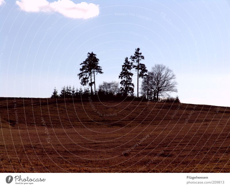 Waldsterben Umwelt Natur Landschaft Pflanze Klima Klimawandel Baum Wiese Feld Hügel Himmel Farbfoto Außenaufnahme Wäldchen Mischwald Silhouette Baumreihe