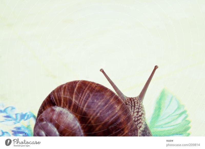 2 Zimmer, Küche, Bad Tier Schnecke Bewegung krabbeln schleimig Zeit Schleim Fühler langsam Auge Weinbergschnecken Farbfoto mehrfarbig Außenaufnahme Menschenleer