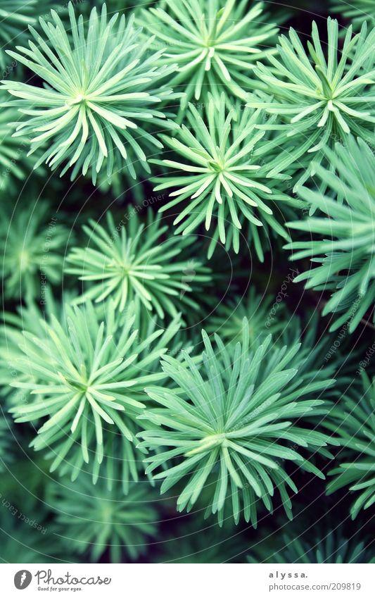 Tief versteckt im Garten... Natur grün Pflanze Sträucher Grünpflanze