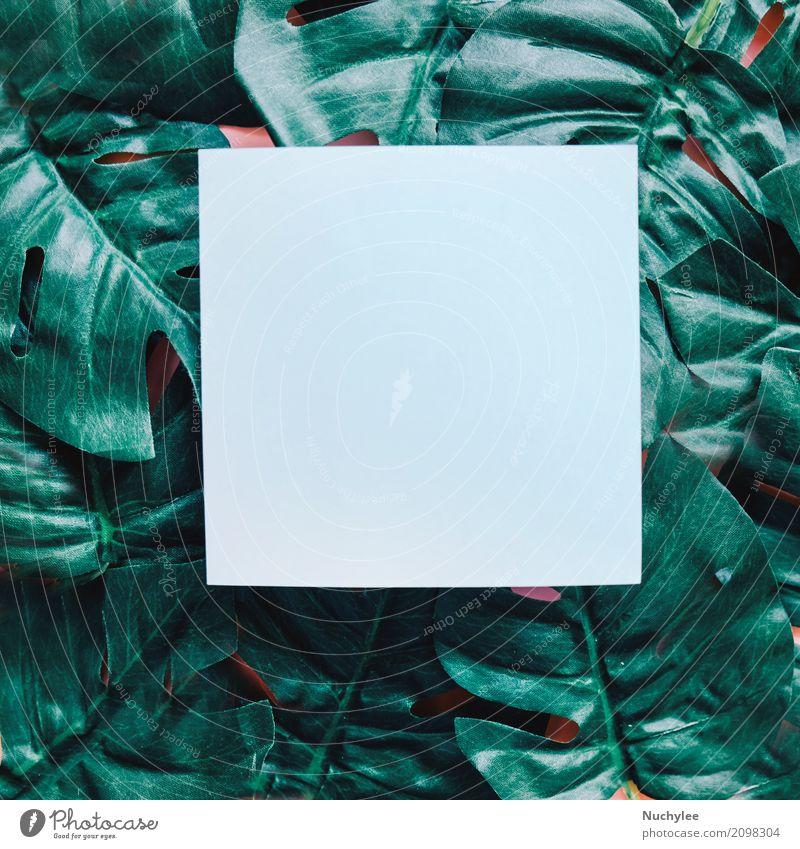 Leeres Papier auf grünem Blatthintergrund Stil Design schön Sommer Garten Dekoration & Verzierung Tapete Kunst Umwelt Natur Pflanze Frühling Wildpflanze Mode