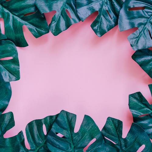 Grüner Palmblattrahmen auf Rosa Natur Pflanze Sommer Farbe grün Blatt Frühling Stil Kunst Garten Mode rosa Design Textfreiraum hell Dekoration & Verzierung