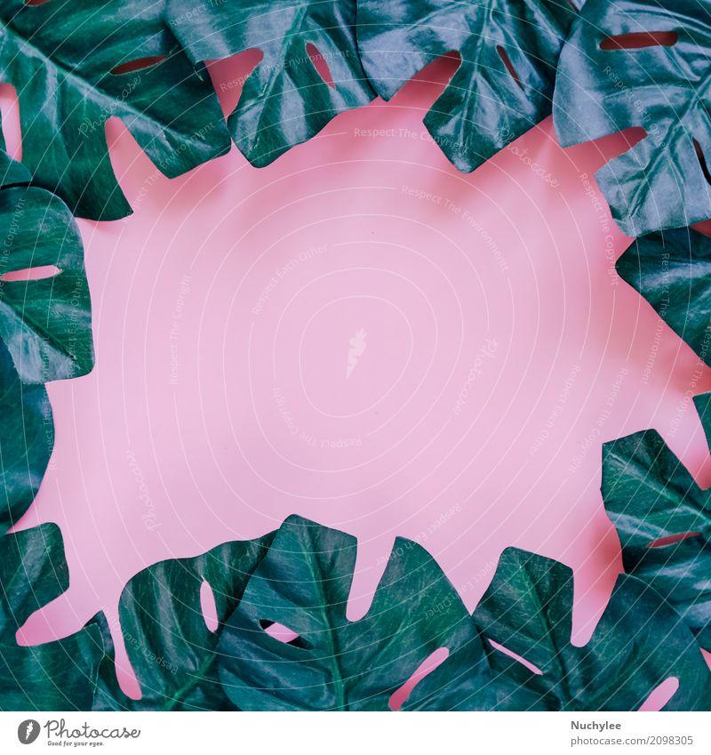 Grüner Palmblattrahmen auf Rosa Stil Design Sommer Garten Dekoration & Verzierung Tapete Kunst Natur Pflanze Frühling Blatt Mode Wachstum frisch hell modern