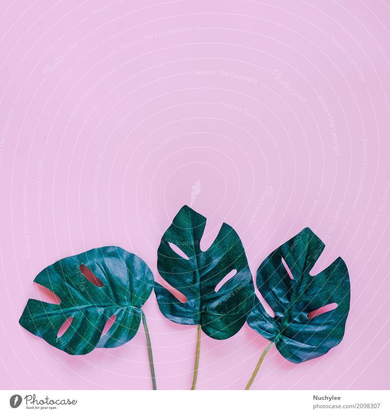 Grüne Palmblätter auf rosa Hintergrund Natur Pflanze Sommer Farbe grün Blatt Frühling Stil Kunst Garten Mode Design Textfreiraum hell modern