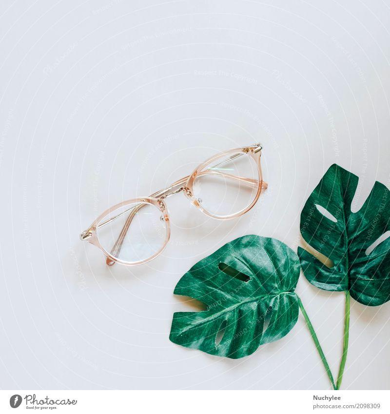 Brillen und grüne Palmblätter Natur Pflanze Sommer Farbe Blatt Lifestyle Frühling Stil Kunst Business Mode grau oben Design Textfreiraum