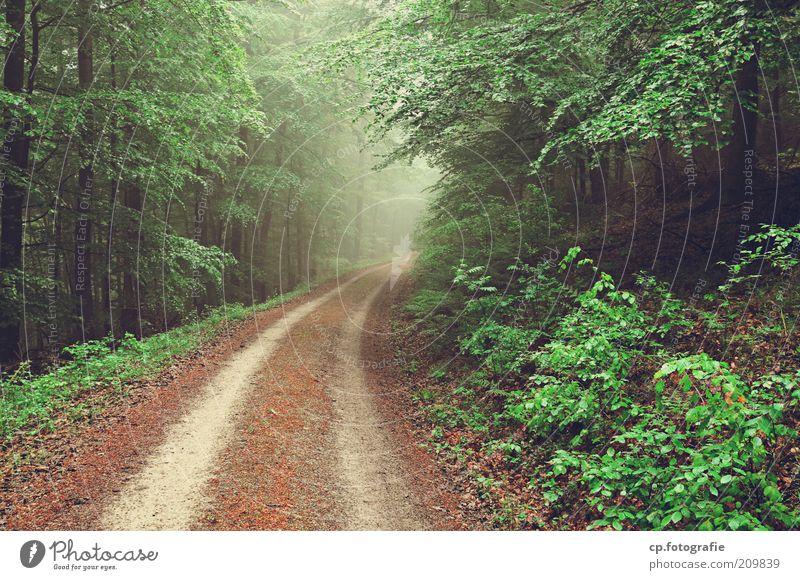 Waldweg Natur Landschaft Pflanze Nebel Baum Sträucher Grünpflanze Nutzpflanze kalt Tag Fußweg Zentralperspektive Menschenleer Reifenspuren