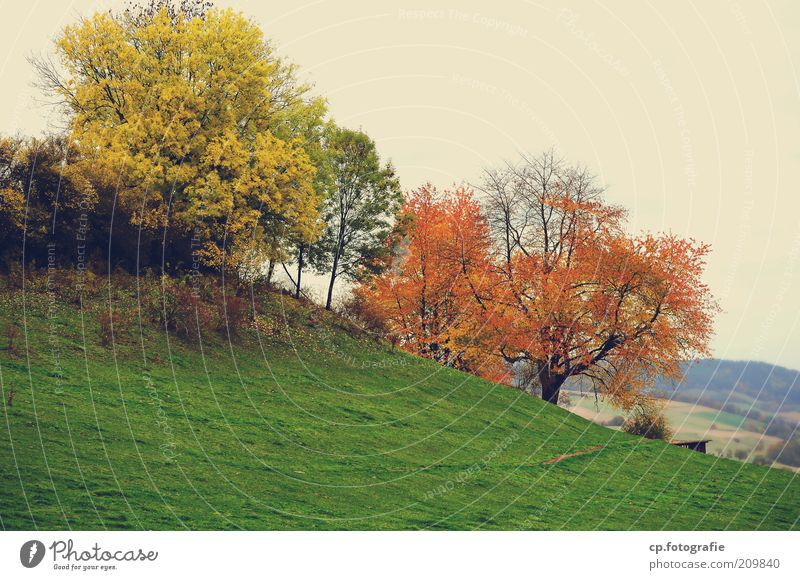 Herbsthang Natur Landschaft Pflanze Baum Gras Sträucher Grünpflanze Wiese Wald schlechtes Wetter Abend Herbstfärbung Herbstlaub herbstlich Tag