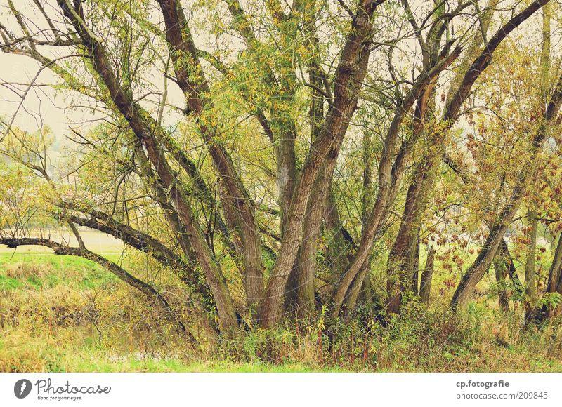 Gruppentreffen Natur Baum Pflanze Frühling Wachstum Grünpflanze üppig (Wuchs) Naturwuchs