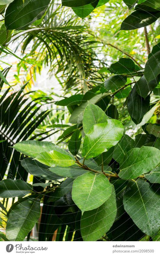 In the jungle Ferien & Urlaub & Reisen Sommer Natur Pflanze Urwald Holz atmen Blühend entdecken hängen stehen Wachstum groß hell nass natürlich wild grün ruhig