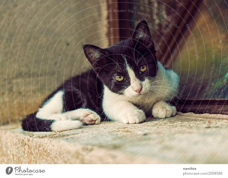 Schöne Gassenkatze Katze Stadt schön weiß Tier schwarz Tierjunges Auge gelb natürlich frei niedlich Freundlichkeit weich Schutz Vertrauen