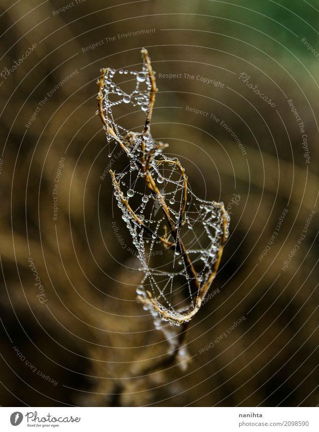Makro des Wassers fällt in ein Spinnennetz Umwelt Natur Pflanze Wassertropfen Frühling Winter Klima Wetter Nebel Regen Wildpflanze hell kalt nass natürlich