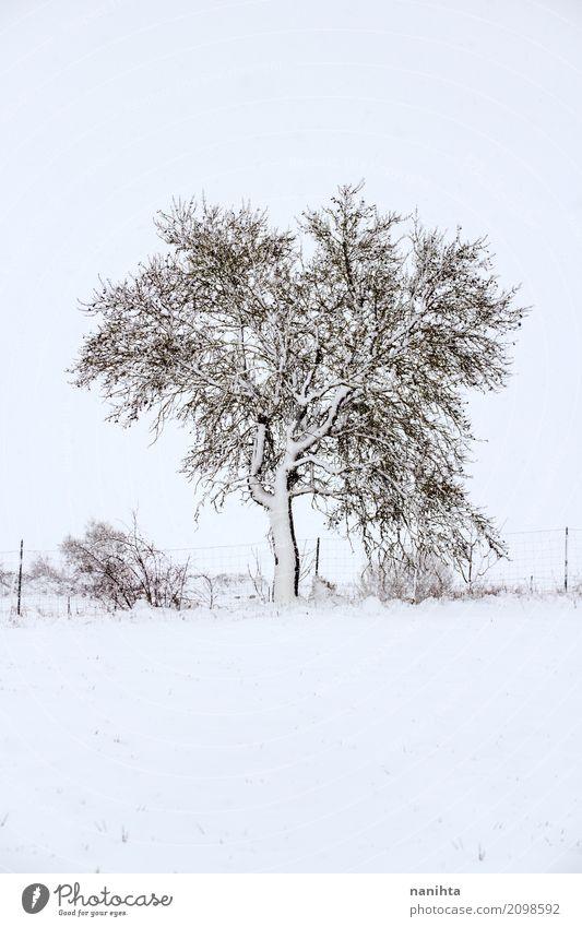 Schneebedeckter Baum Umwelt Natur Landschaft Pflanze Winter Klima Wetter schlechtes Wetter Eis Frost Schneefall Sträucher Wiese authentisch einfach kalt